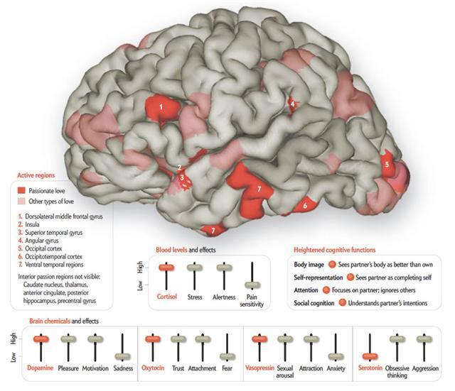 Scientific American Feb 2011 Issue Graphics