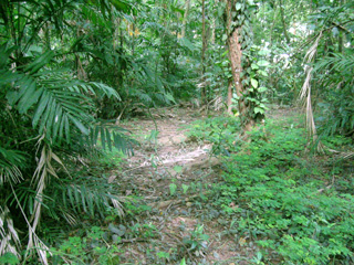 backyard forest