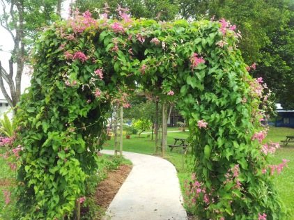 Arch beautifully decorated with the vines of the Honolulu creeper