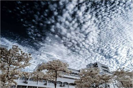 A Infra-red spectrum false-colour image of Altocumulus Floccus Clouds on a particularly dry and sunny day in Singapore. Using Infra-red photography, vague details of the moisture patterns in these rare clouds were revealed. Altocumulus clouds are an indicator of changing weather and potential thunderstorms.
