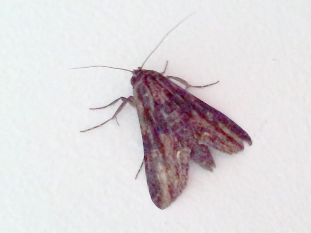 Close-up shot of black moth