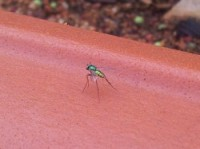 A small insect