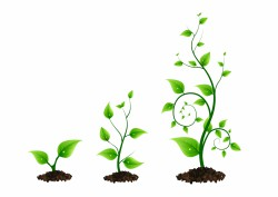 three_green_plant_growth_cycle