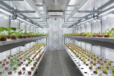Greenology VertiVegies - climate-controlled hydroponics system