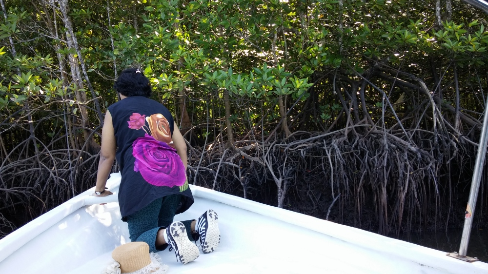 mangroves_supporting stilt roots